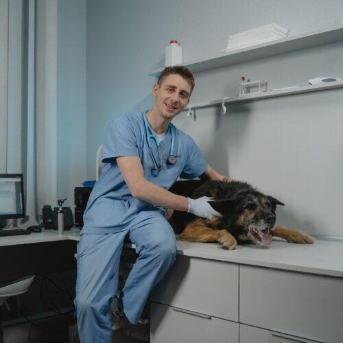 Tiermedizin Einstellungstest
