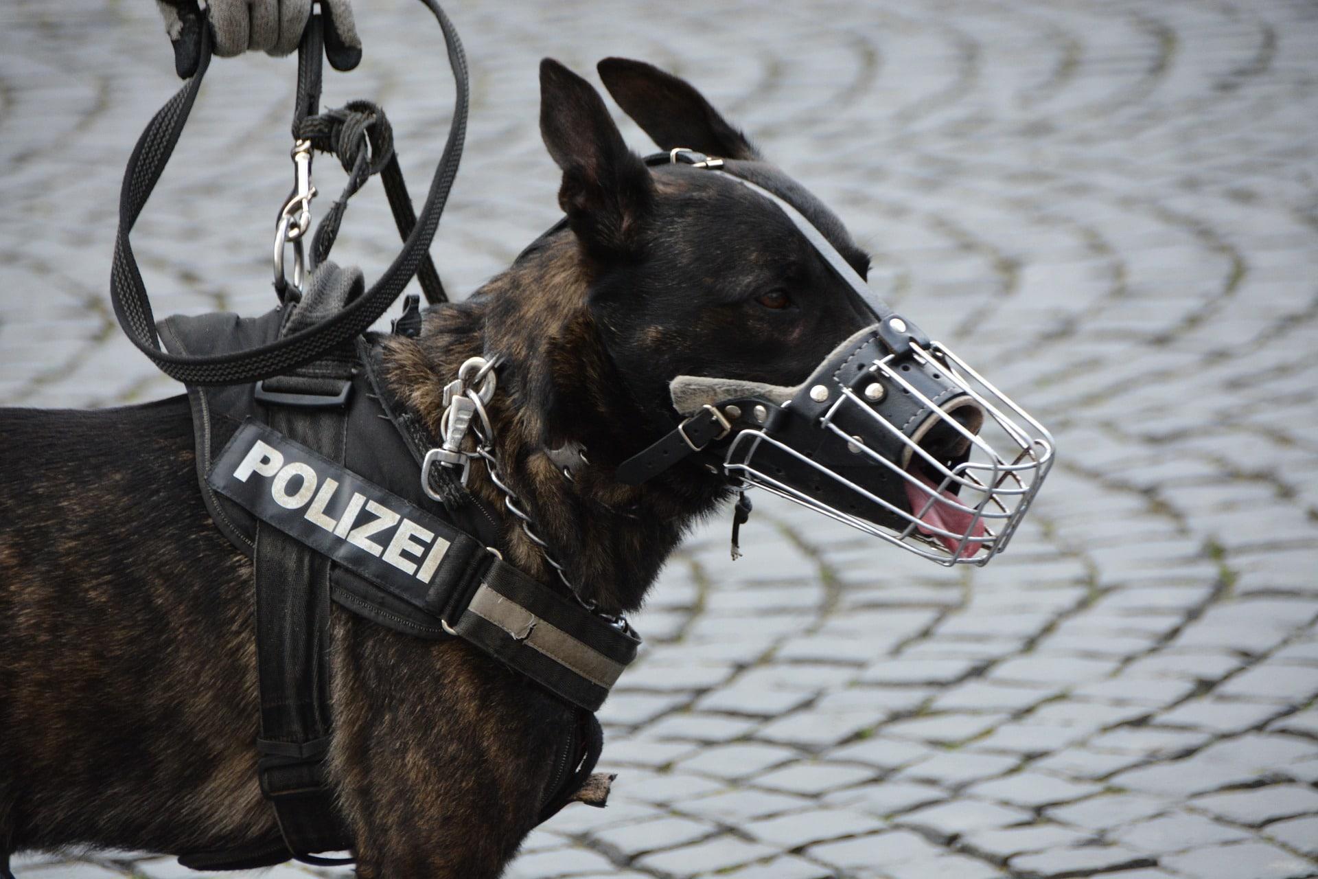 Hundeführer bei der Polizei
